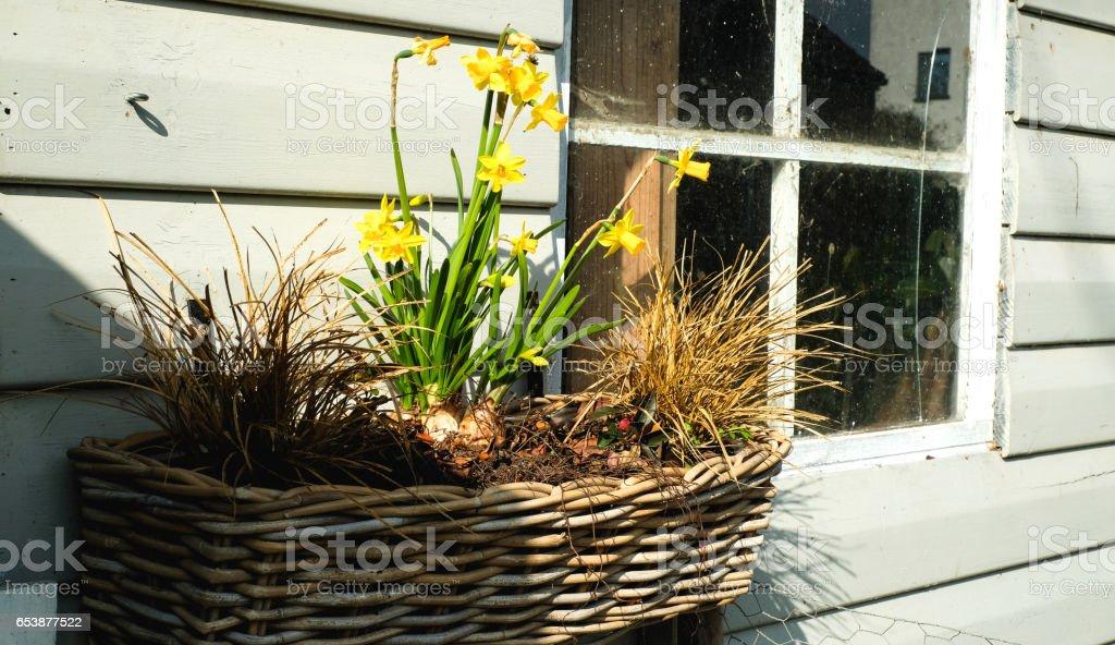 Maiglöckchen Garten stock photo