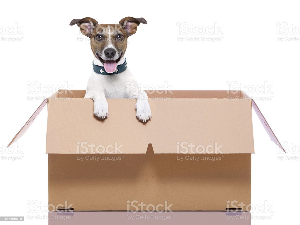 mail moving box dog stock photo