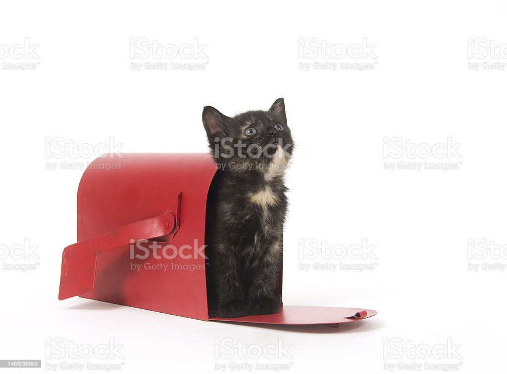 Mail order kitten stock photo