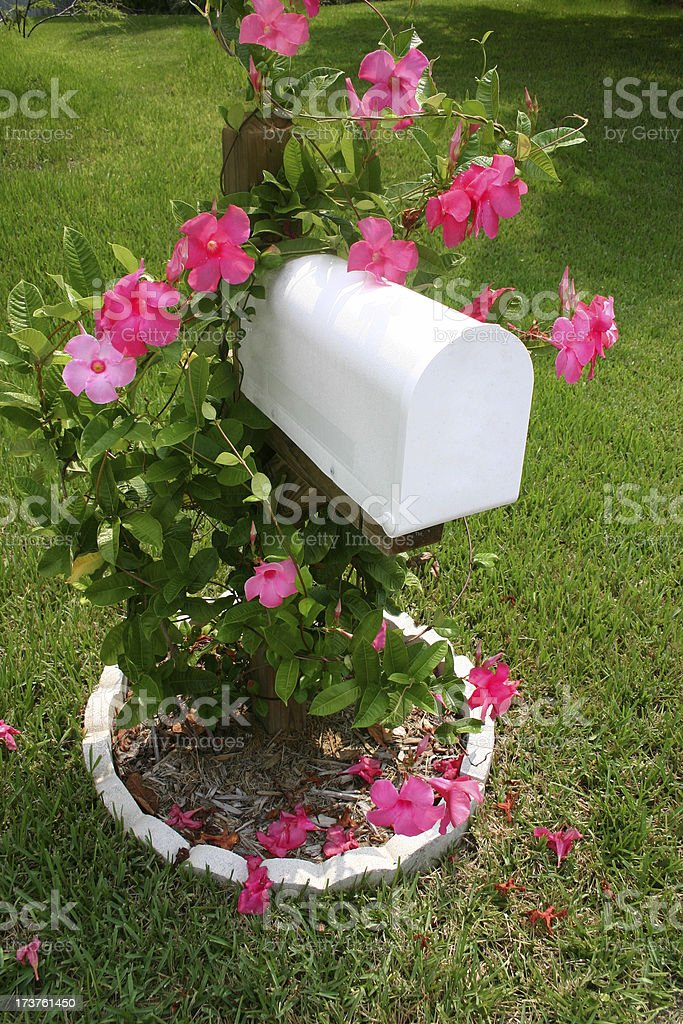 Mailbox with Pink Flowers royalty-free stock photo