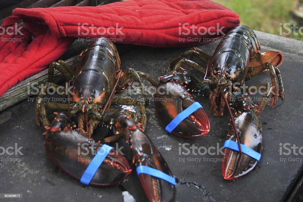 Maine lobsters for lunch royalty-free stock photo