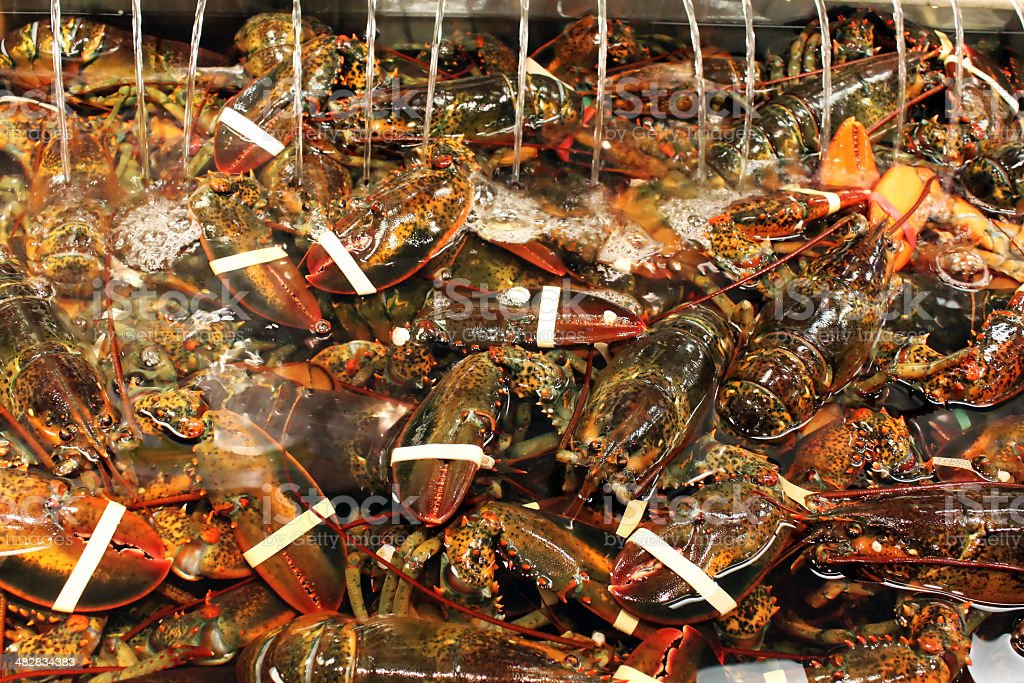 Maine lobsters stock photo