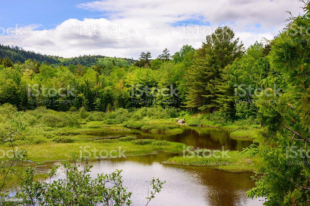 Maine North Woods stock photo