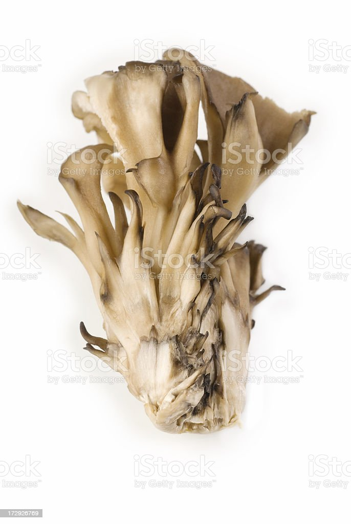 Maitake Mushroom. stock photo