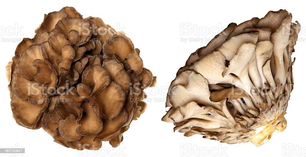 Maitake mushroom stock photo