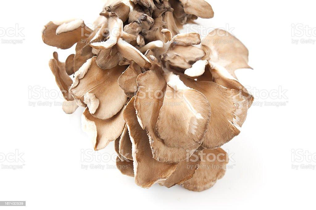 maitake mushrooms stock photo