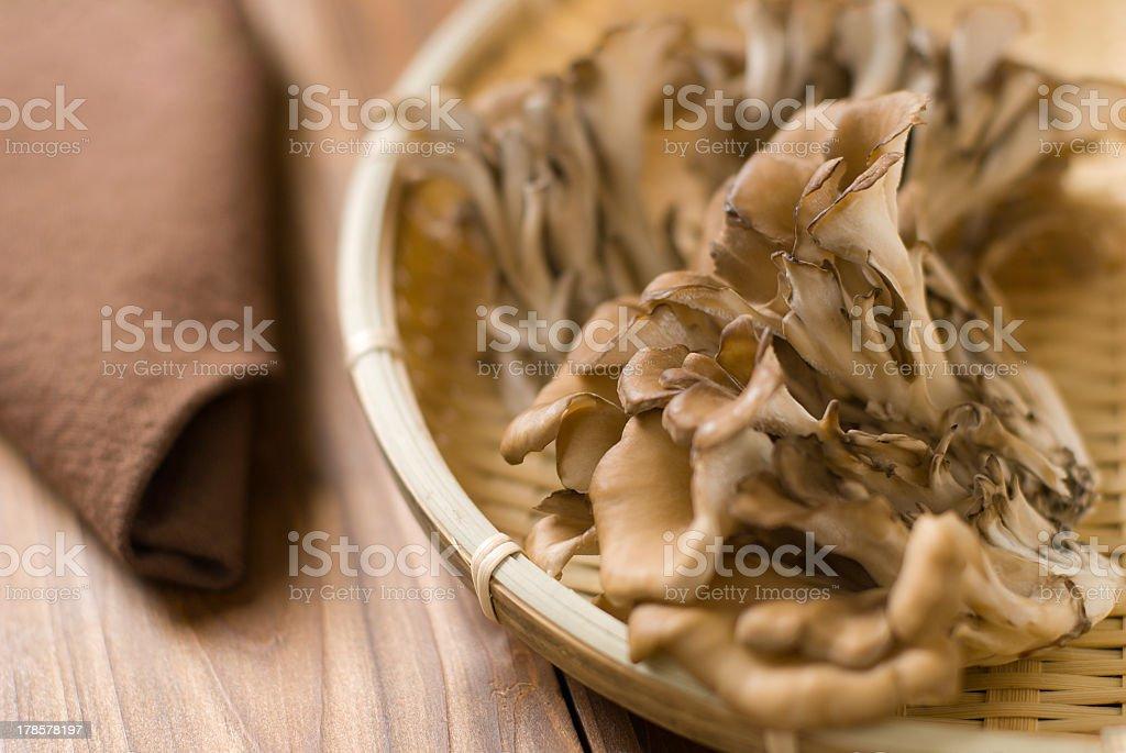 Maitake (Grifola frondosa) stock photo
