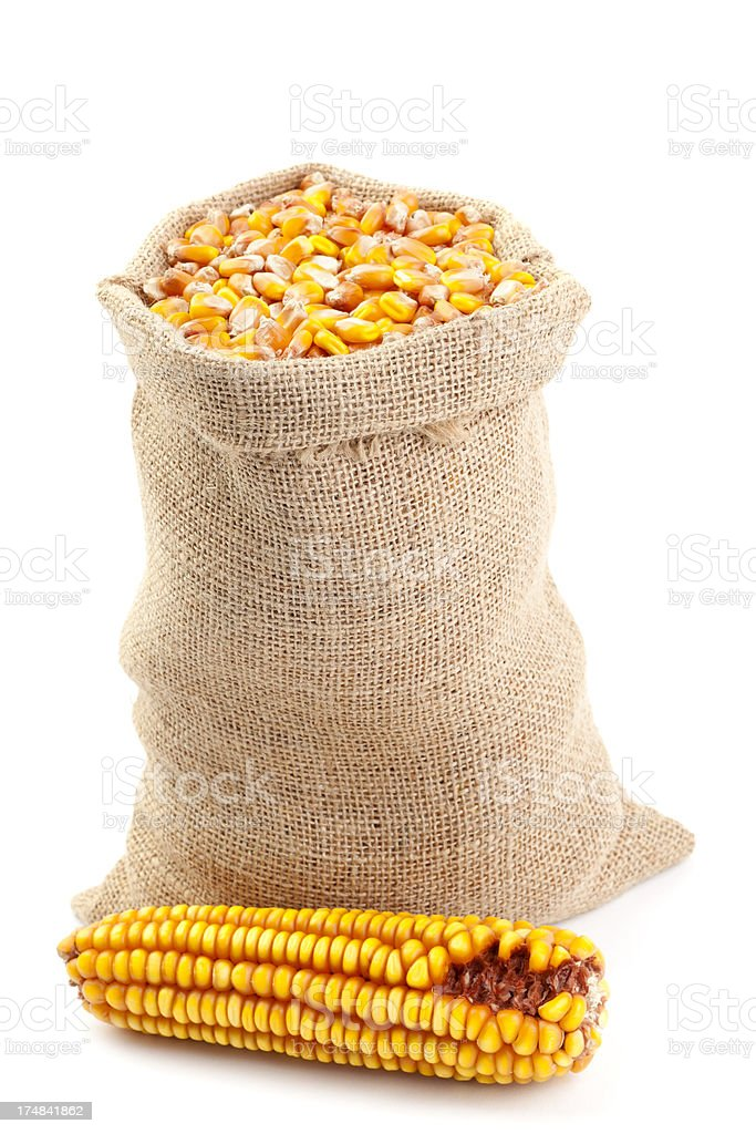 Maize in Burlap Sack royalty-free stock photo