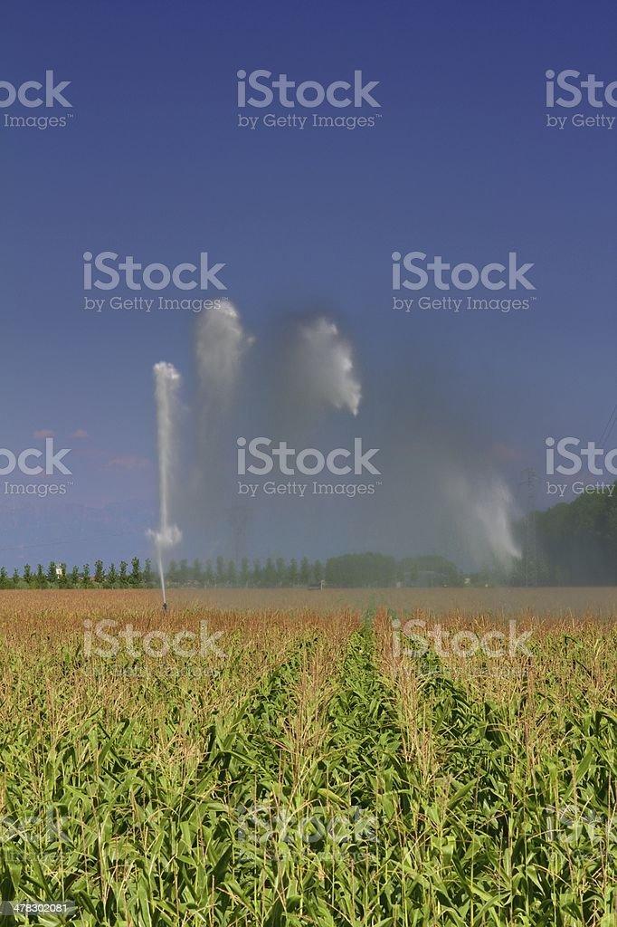 Maize irrigation stock photo