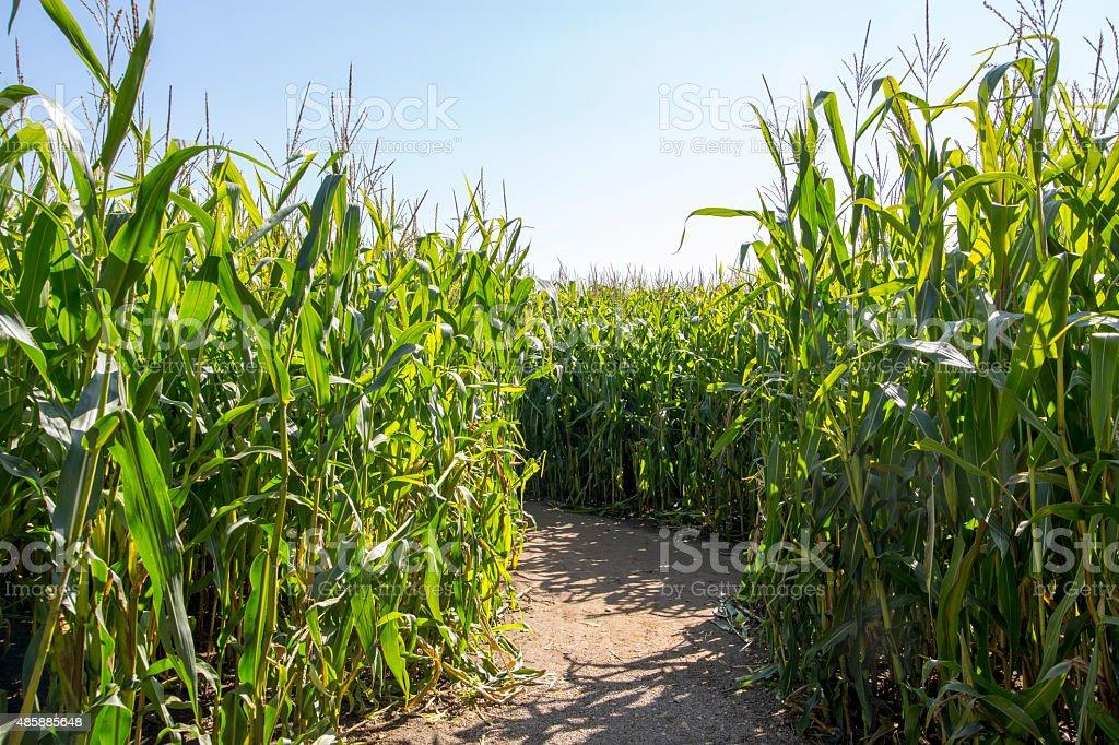 Maize Maze royalty-free stock photo