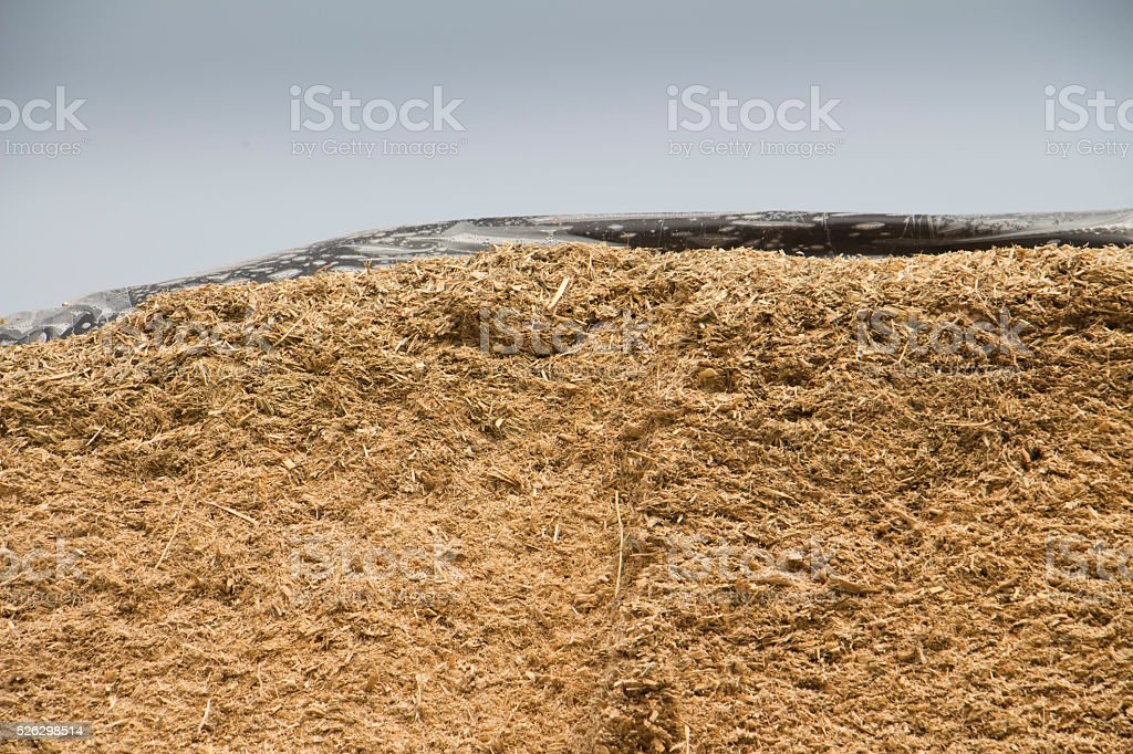 Maize Silage stock photo