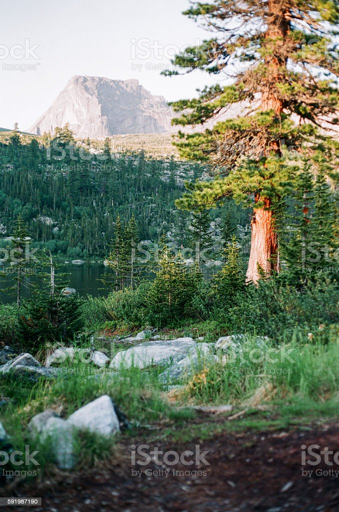 Majestic alone tree with sunny beams at mountain valley. Analog royalty-free stock photo