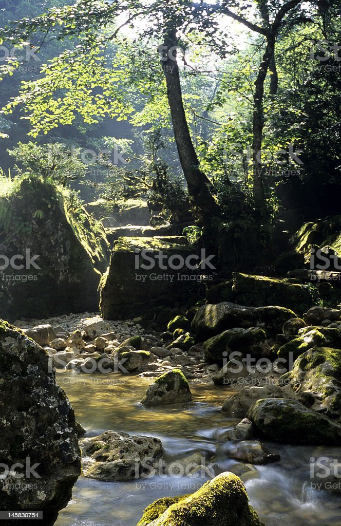 Majestic forest stock photo