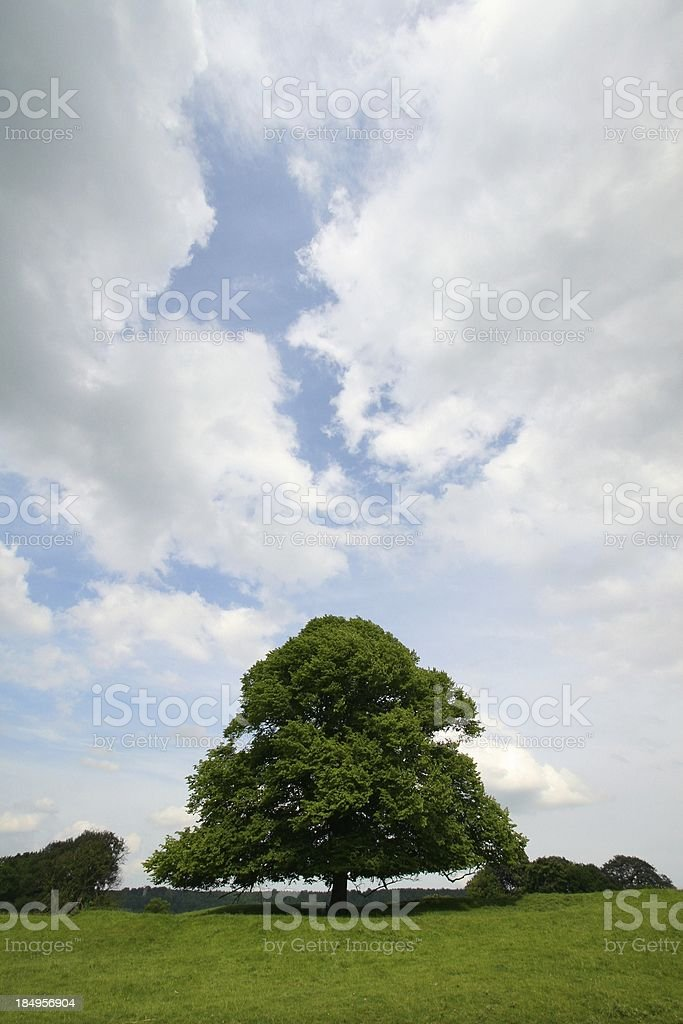 Majestic Oak royalty-free stock photo