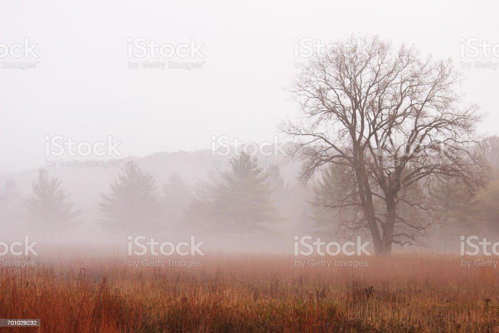 Majestic oak stock photo