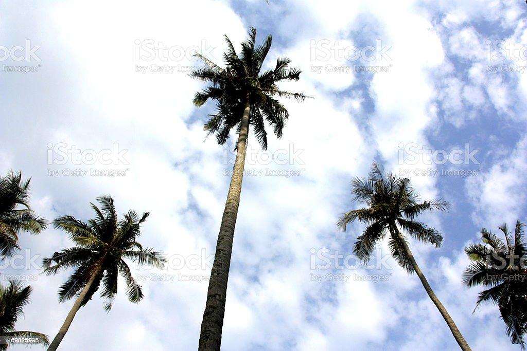 Majestoso Palma árvores alcançar dentro do CÉUConstellation name (optional) foto de stock royalty-free