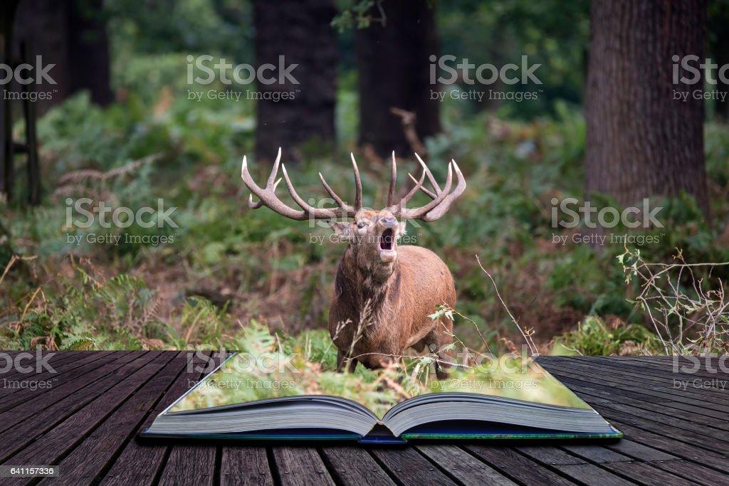 Majestic powerful red deer stag Cervus Elaphus in forest landscape stock photo