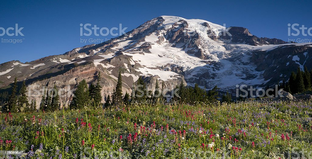 Majestic Snowcapped Mountain Peak Mt. Rainier Wildflowers Cascade Range stock photo