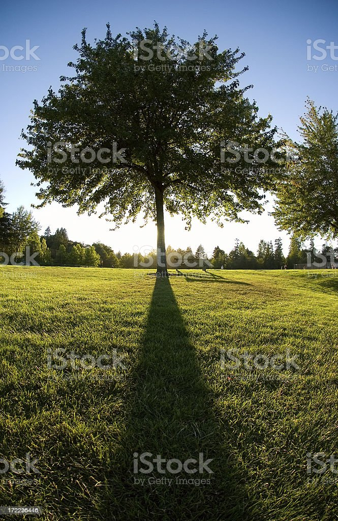 Majestic Tree at Dusk royalty-free stock photo