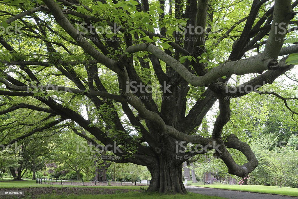Majestic tree royalty-free stock photo