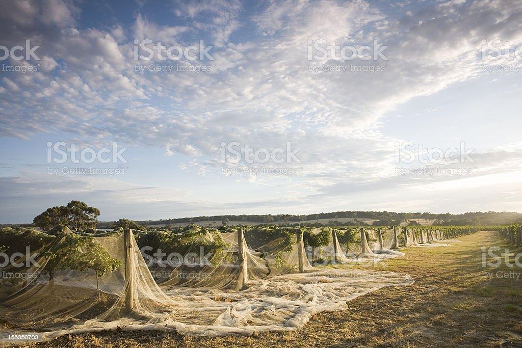 Majestic Winery stock photo