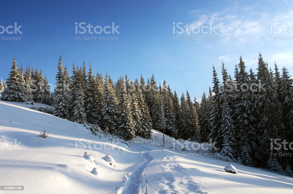 Majestic winter landscape glowing by sunlight in the morning. Dr stock photo