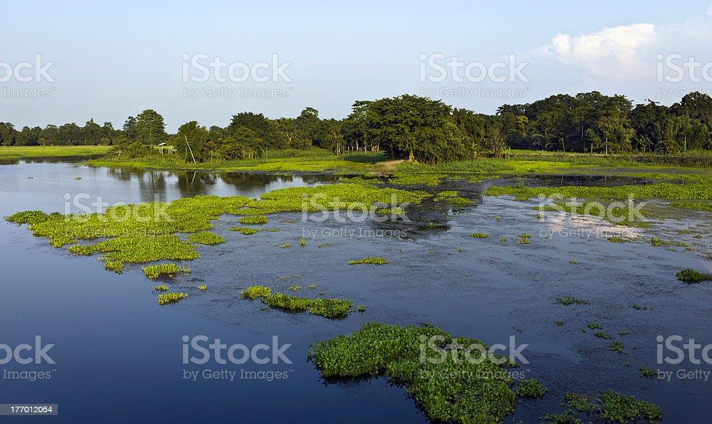 Majuli island, lagoon with water hyacinth, Assam, India stock photo