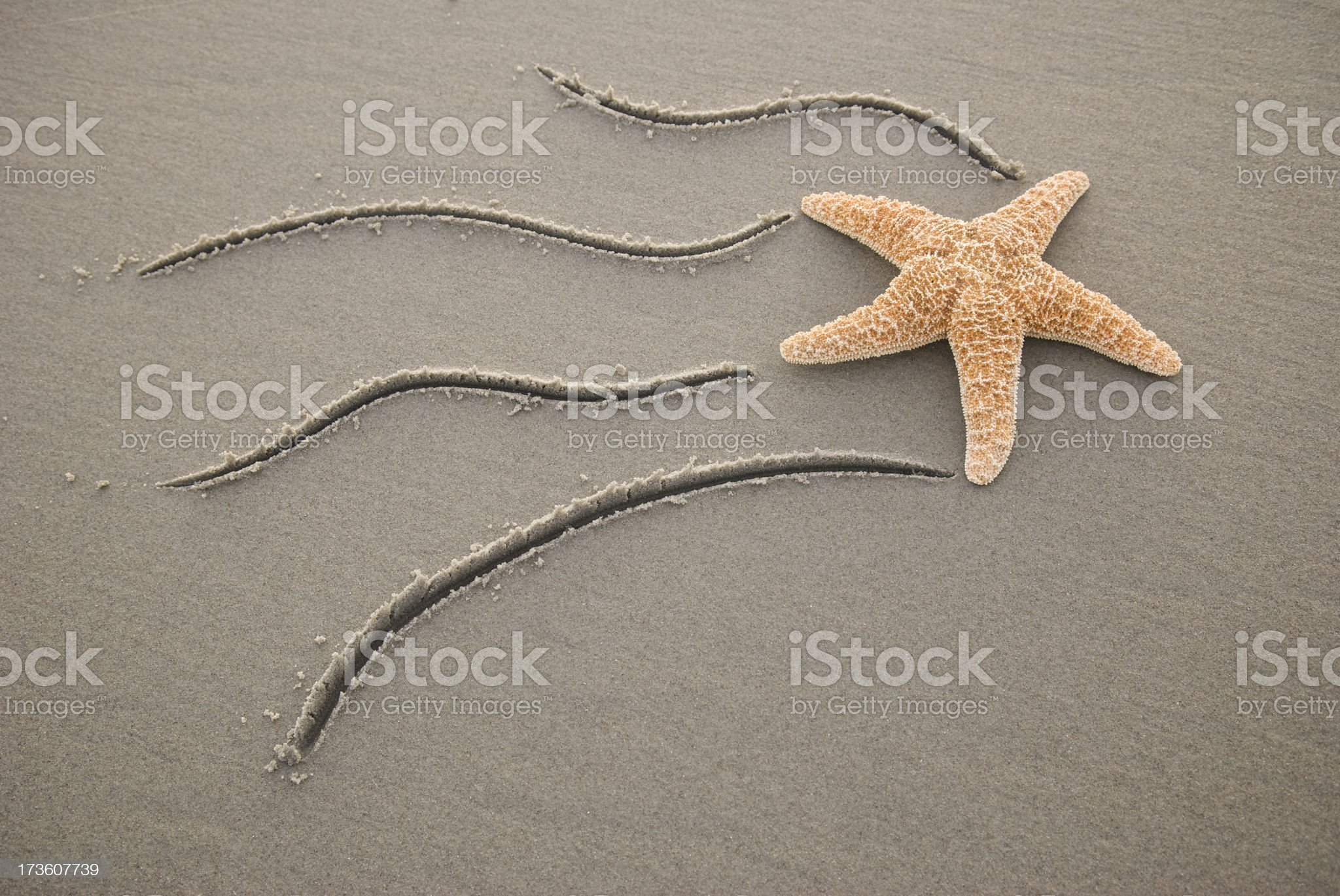 Make a Wish on Shooting Star (fish) royalty-free stock photo