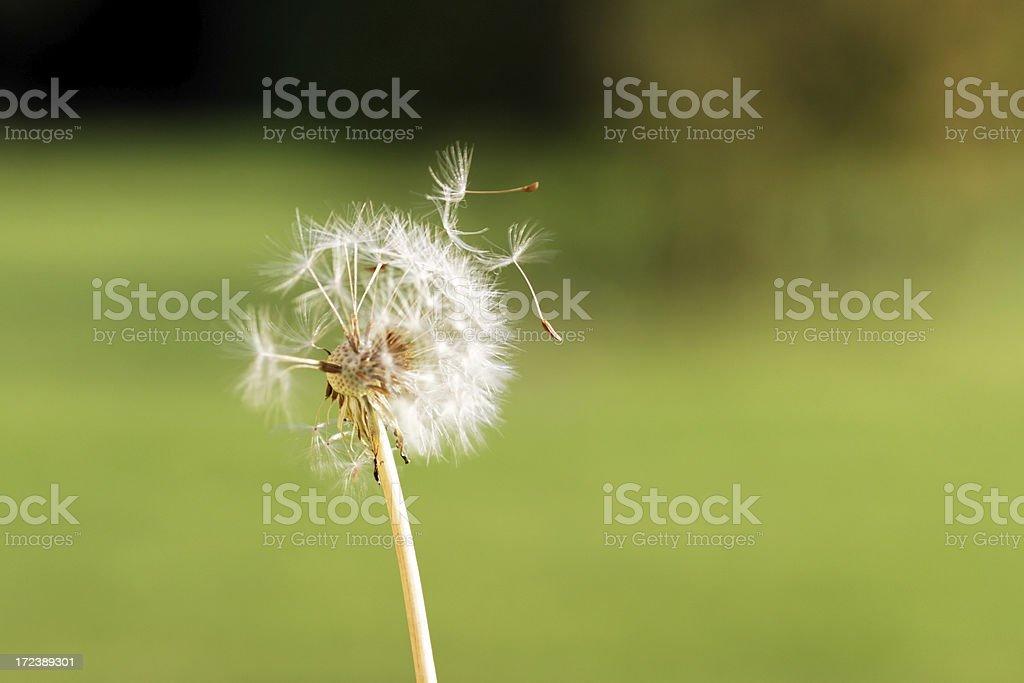 Make a wish royalty-free stock photo