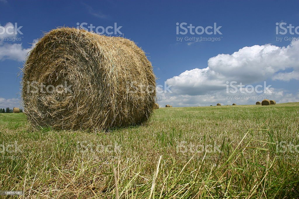 Make hay while the sun shines, round bale royalty-free stock photo