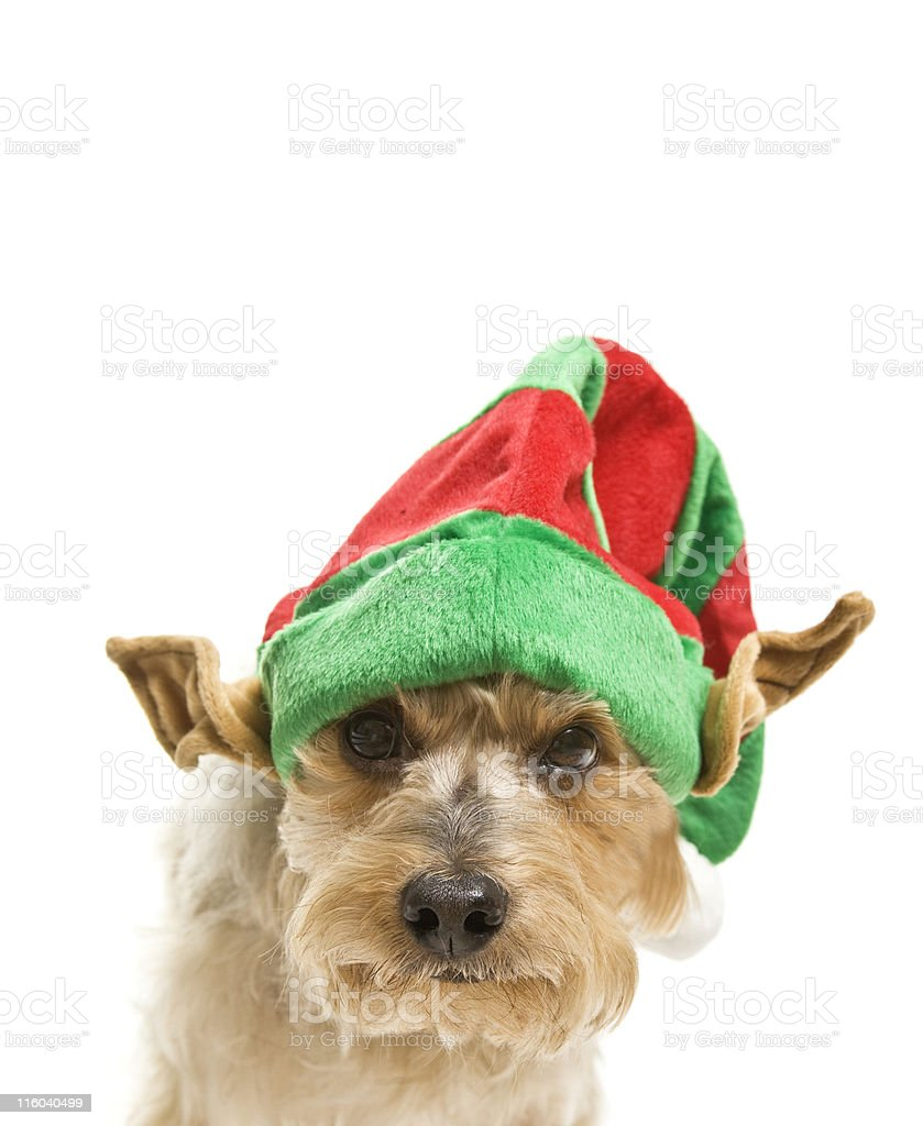 Making a List - Have You Been Naughty or Nice? royalty-free stock photo