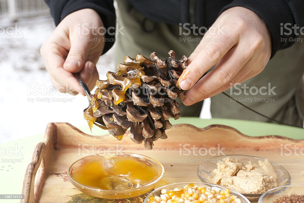making a pinecone bird feeder stock photo