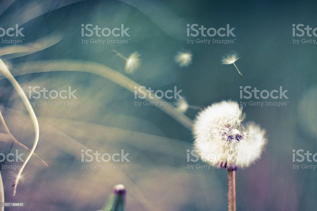making a wish stock photo