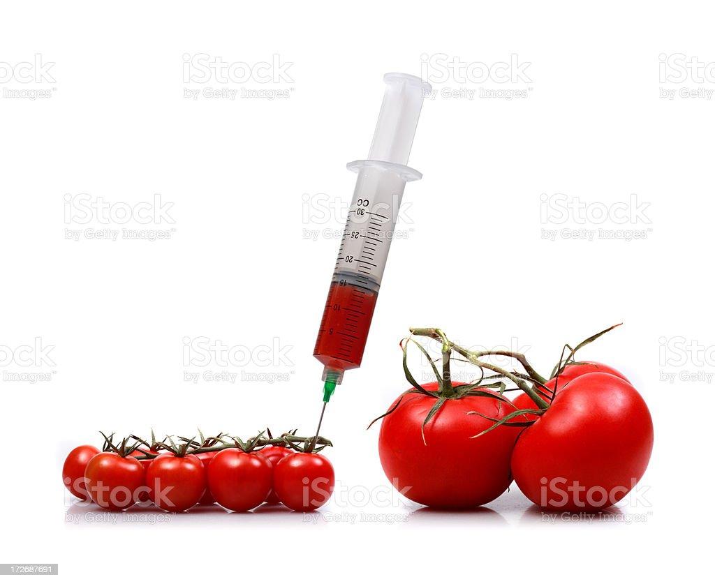 making big tomatoes stock photo