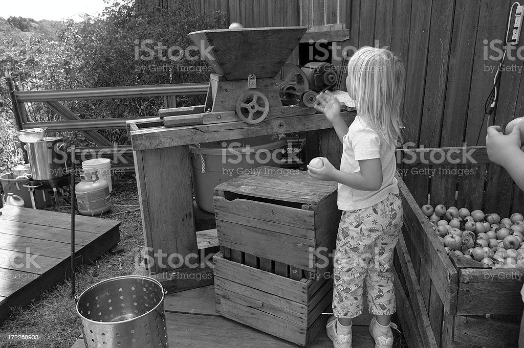 Making Cider stock photo
