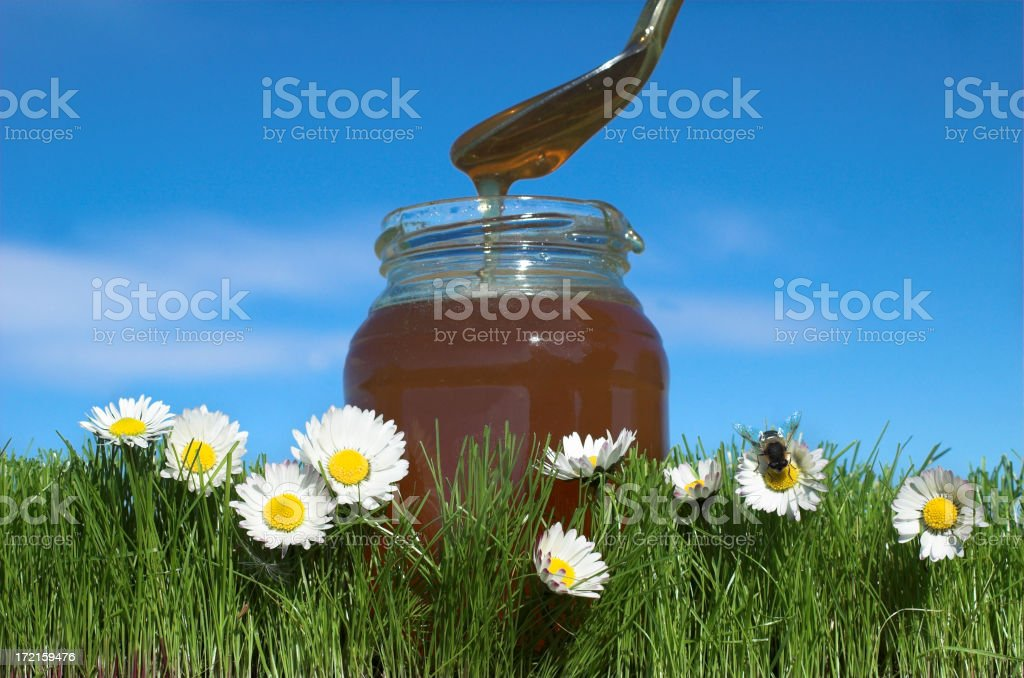 making honey royalty-free stock photo