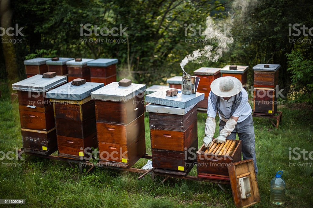 Making honey stock photo