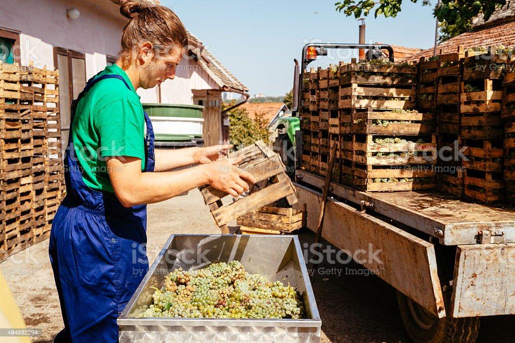 Making Wine stock photo