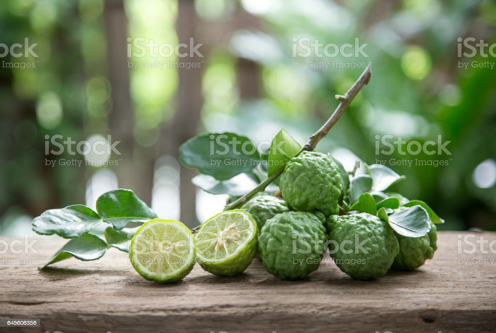 Makrut lime stock photo