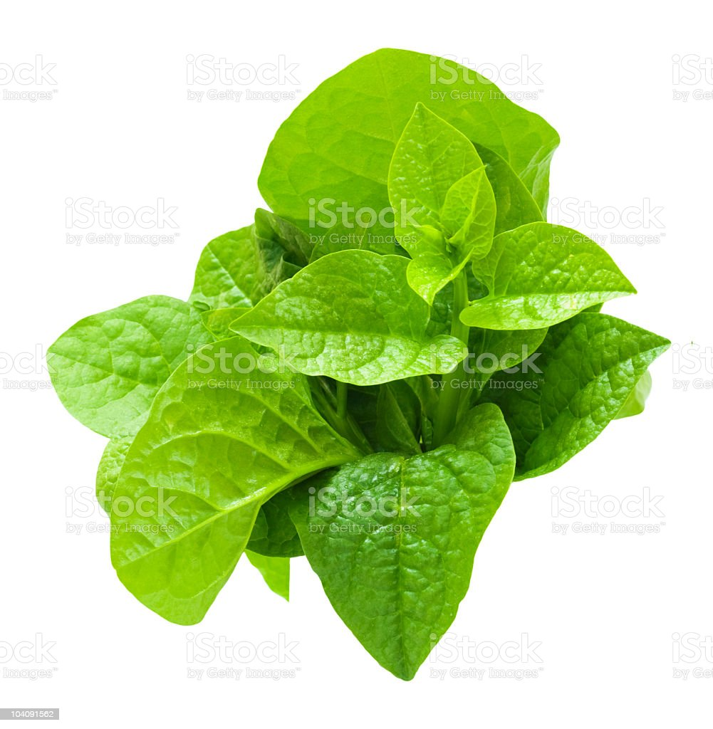 Malabar spinach royalty-free stock photo