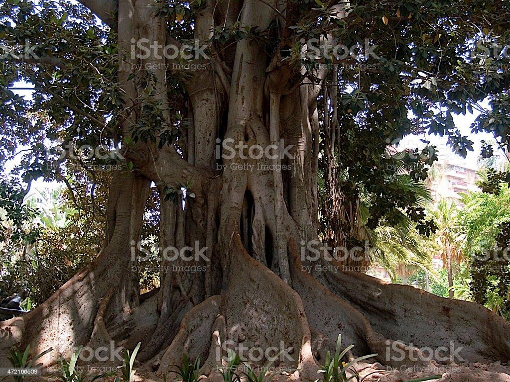 Malaga royalty-free stock photo
