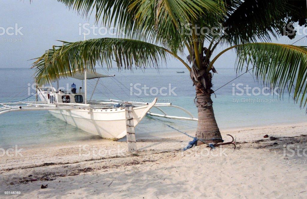 malapascua beach palm tree philippines royalty-free stock photo