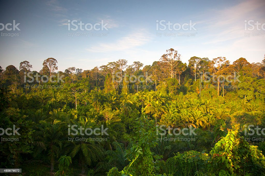 Malasya forest stock photo