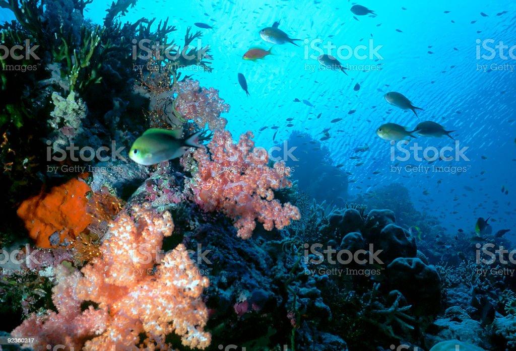 Récif Maldives peu photo libre de droits