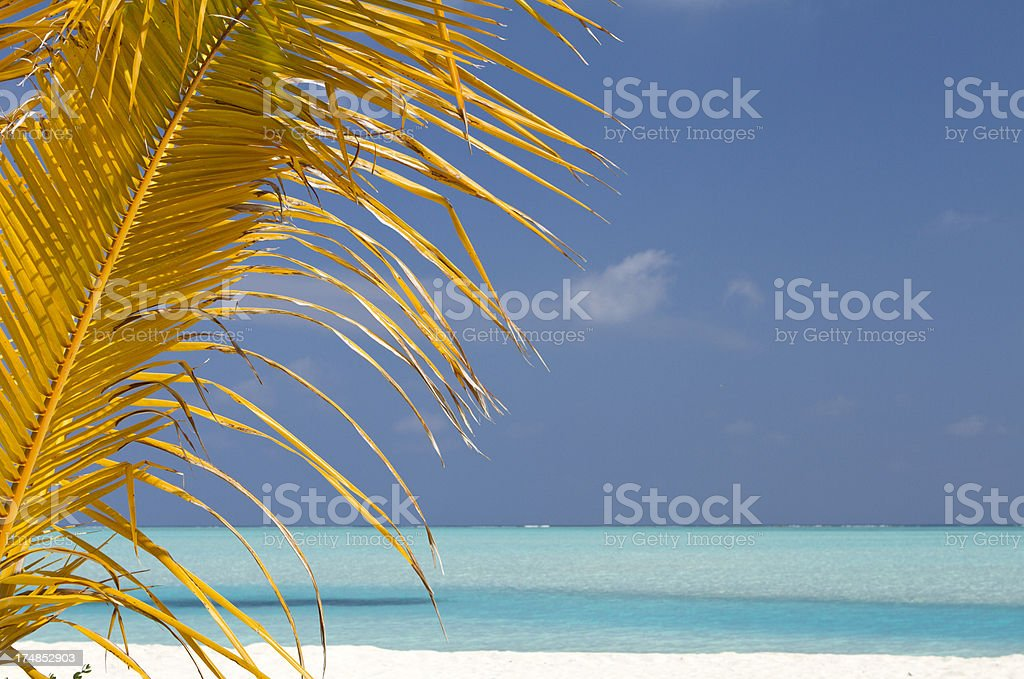 Maldives blue lagoon with palm leaf royalty-free stock photo