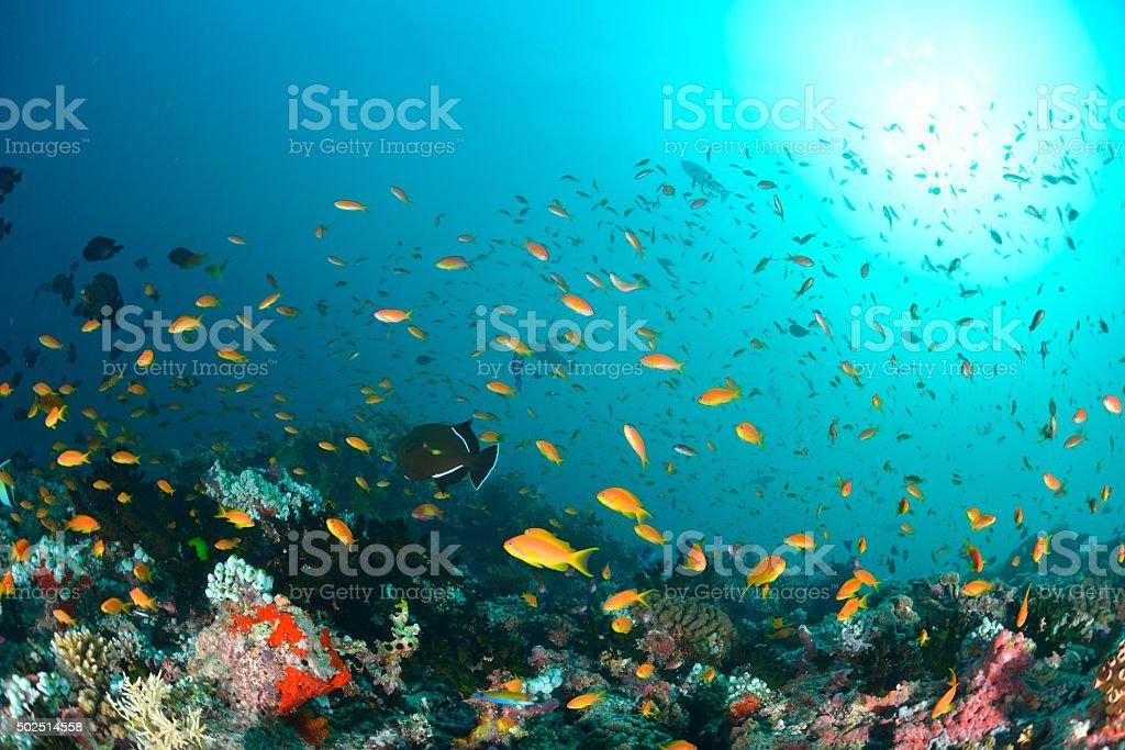 Mar Maldivas foto de stock royalty-free