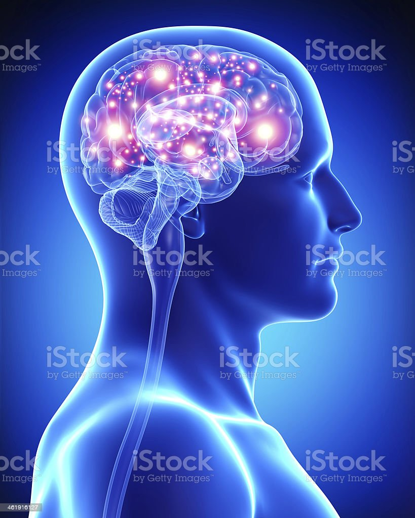 male active brain royalty-free stock photo