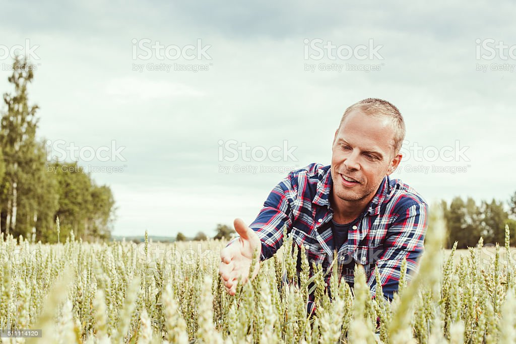 Male agronom agriculture worker researching stock photo
