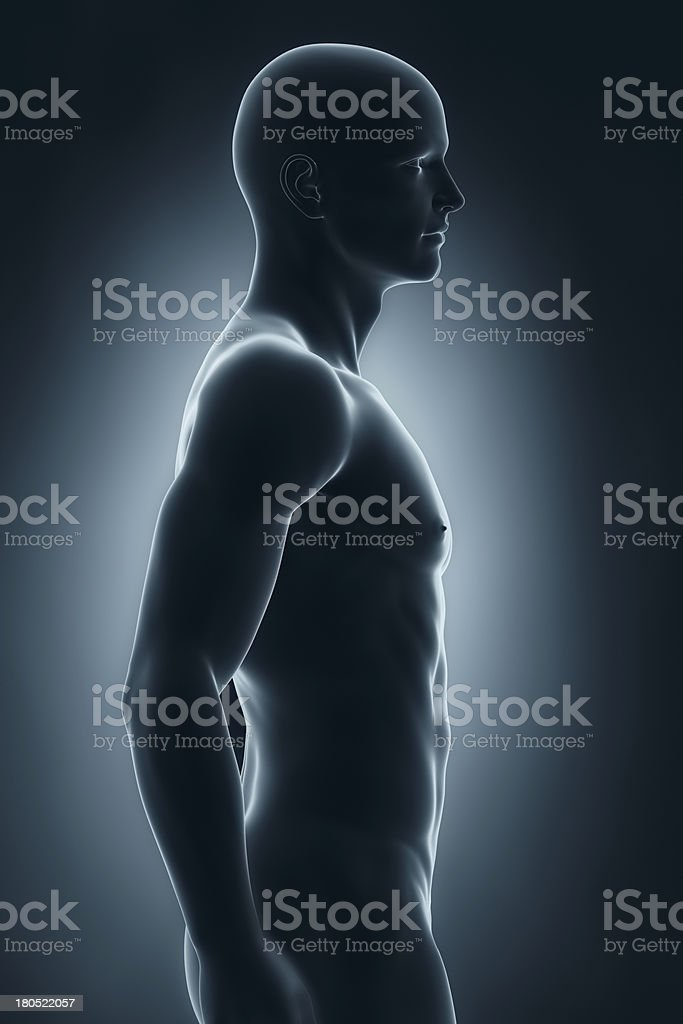 Male anatomy lateral view royalty-free stock photo
