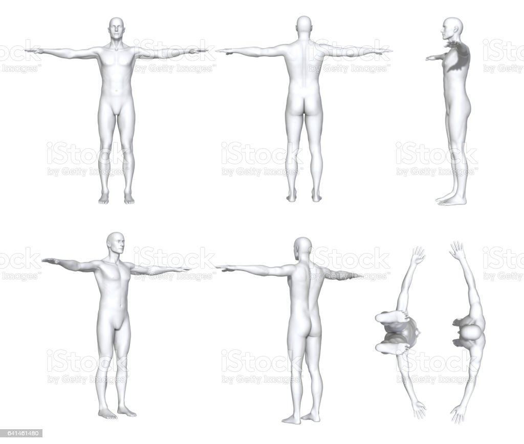 Male Anatomy stock photo